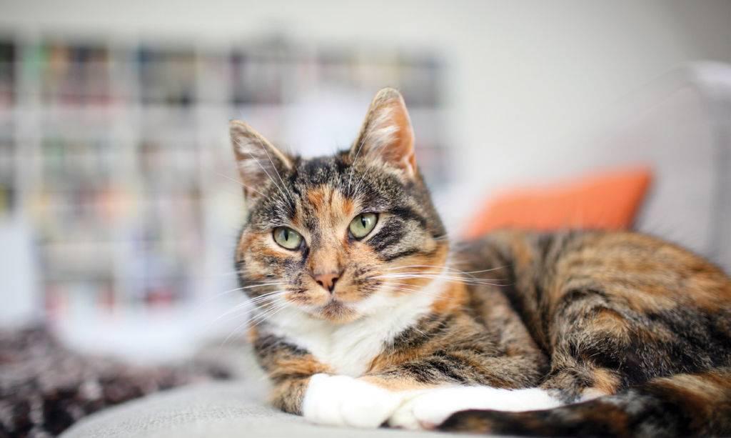 Что делать, если у кота урчит в животе?   в курсе веба