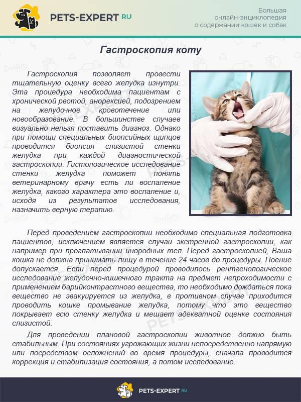 Возможные причины, методы диагностики и лечения черного кала у кошки