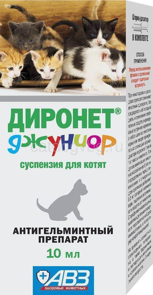 Что нужно учитывать при выборе и применении глистогонных средств для кошек