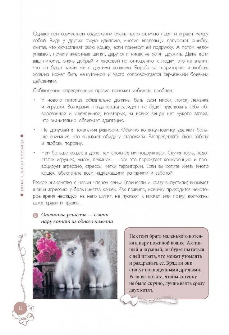 Правильное воспитание котенка: советы и рекомендации экспертов