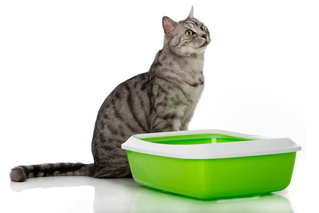 Что делать, если кот не ест: возвращаем аппетит