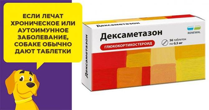 Как правильно давать кошке препарат дексаметазон: дозировка уколов