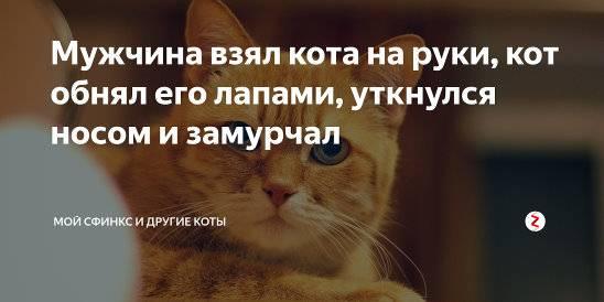 Кошки обнимаются и целуются. учимся обниматься у кошек. почему кошка обнимает котёнка