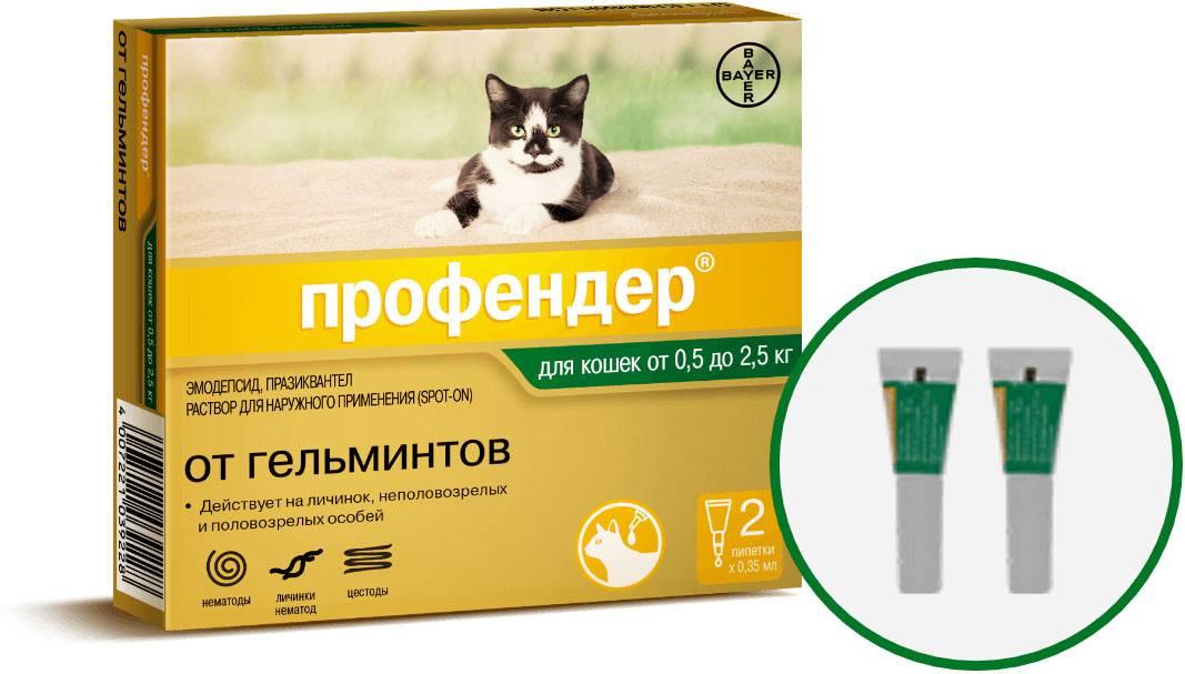Обзор глистогонных препаратов для кошек — таблетки, уколы, капли и суспензии от глистов