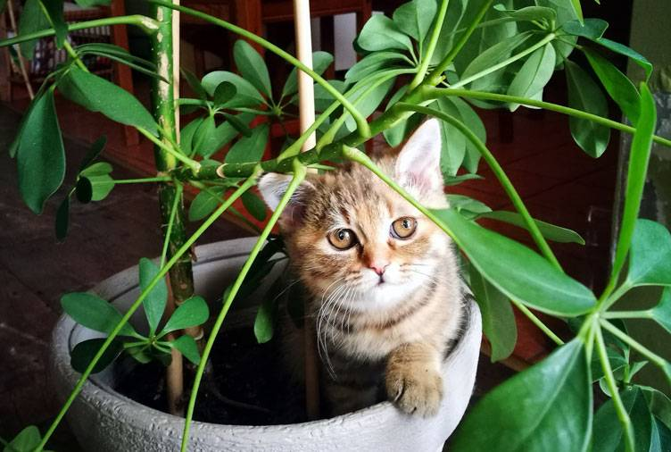 Как отучить кошку лазить в цветочные горшки: советы и рекомендации