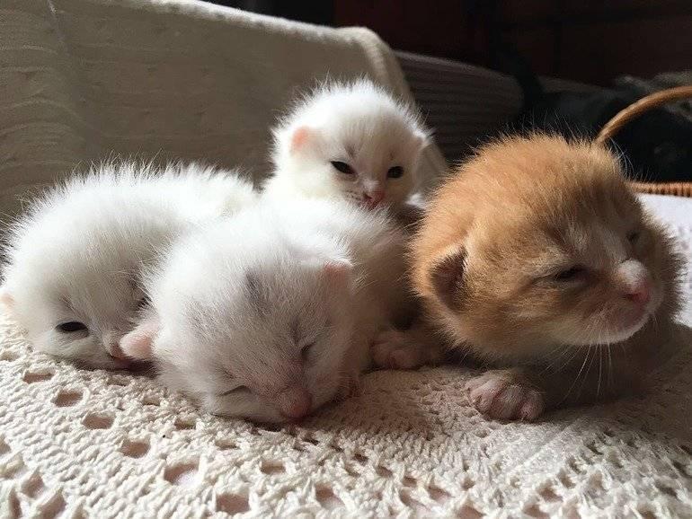 Правила ухода за новорождёнными котятами