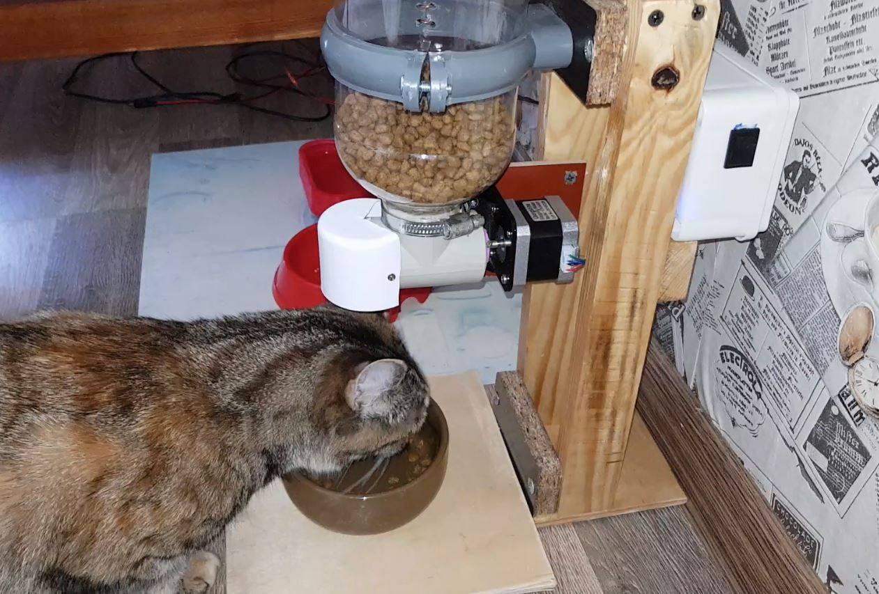 Как сделать автоматическую кормушку для кошки своими руками: пошаговая инструкция, фото, видео