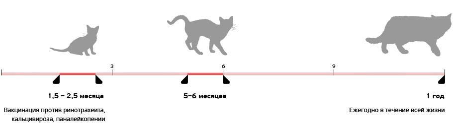Прививки от чумки кошкам