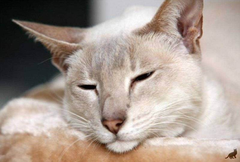 Можно ли кормить кошку только сухим кормом и как это делать?