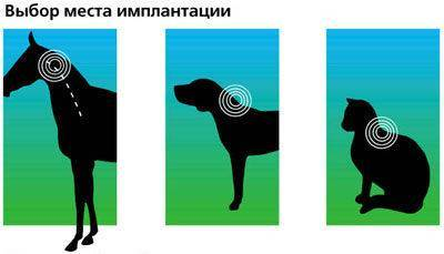 Чипирование животных: что это такое?