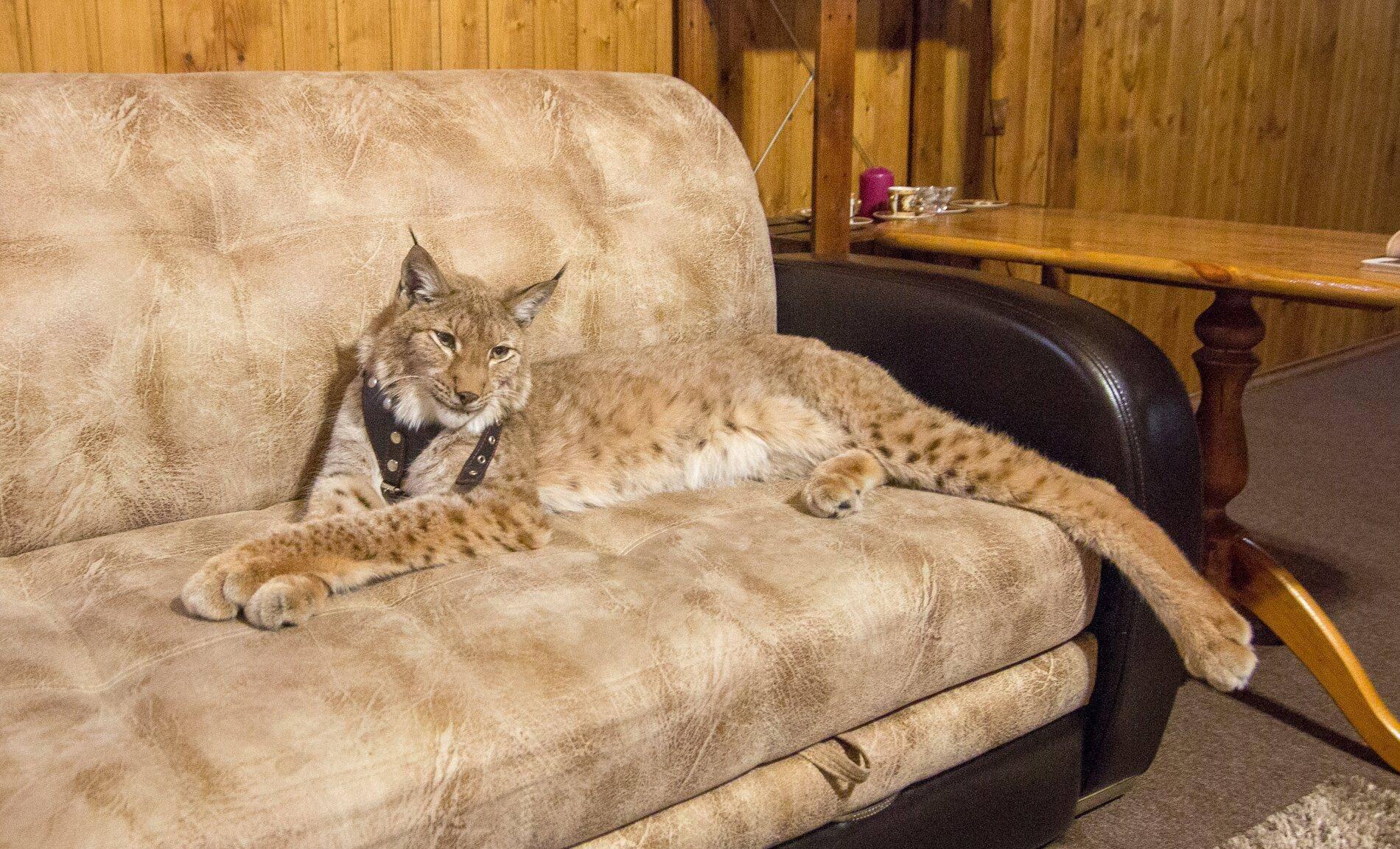 Каких животных выгоднее всего разводить в домашних условиях