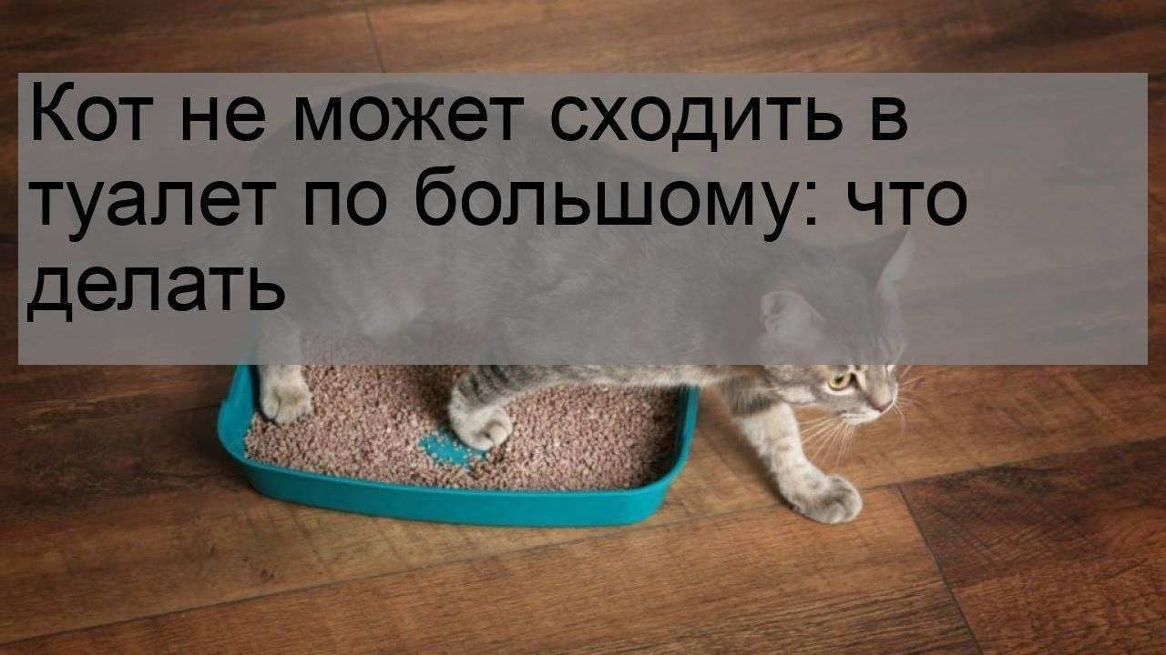 Кот не ходит в туалет