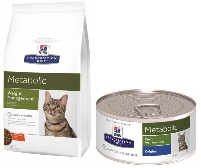 Чем кормить кошку при запоре: список полезных продуктов