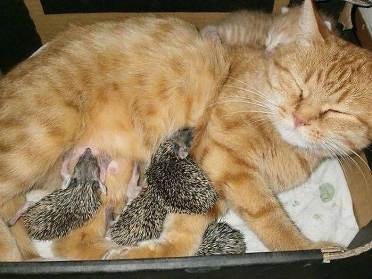 4 способа заставить кошку спать по ночам