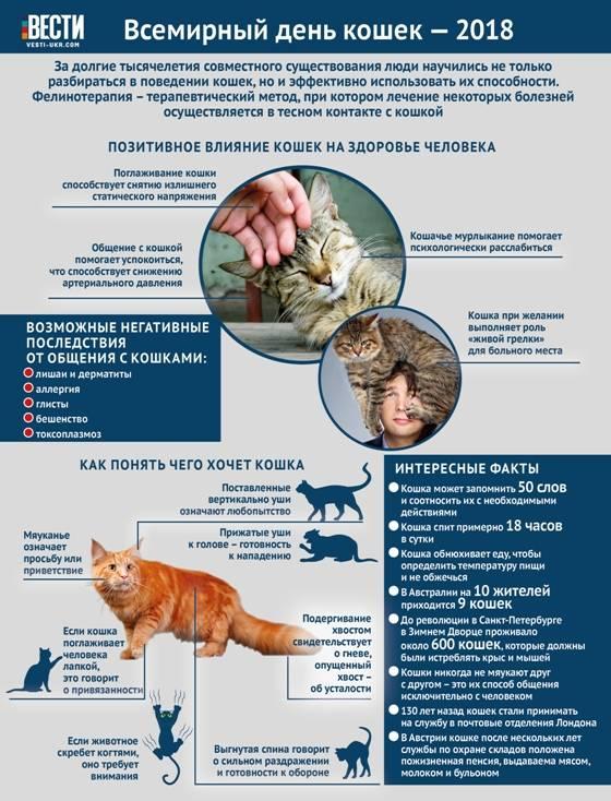 10 фактов о влиянии кошек на здоровье человека, после которых вам точно захочется завести питомца