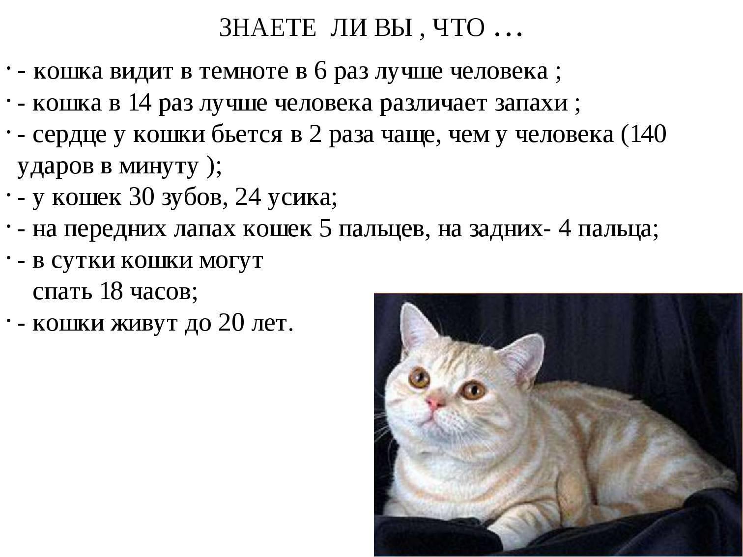 Примета, по которой кошки уходят из дома