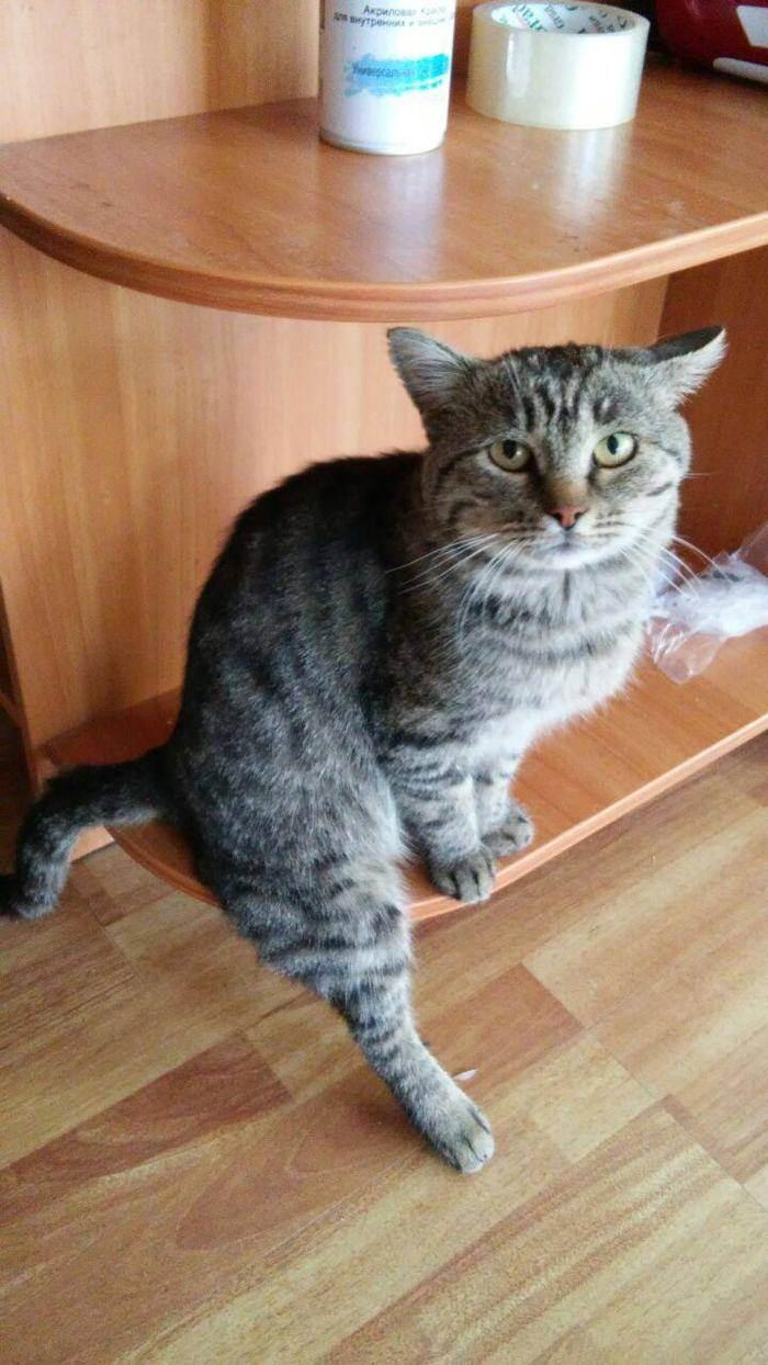 Почему кошка хромает на переднюю лапу без видимых повреждений, что делать?