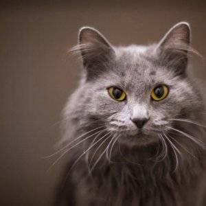Выпадение усов у котов: о чём говорит и что делать