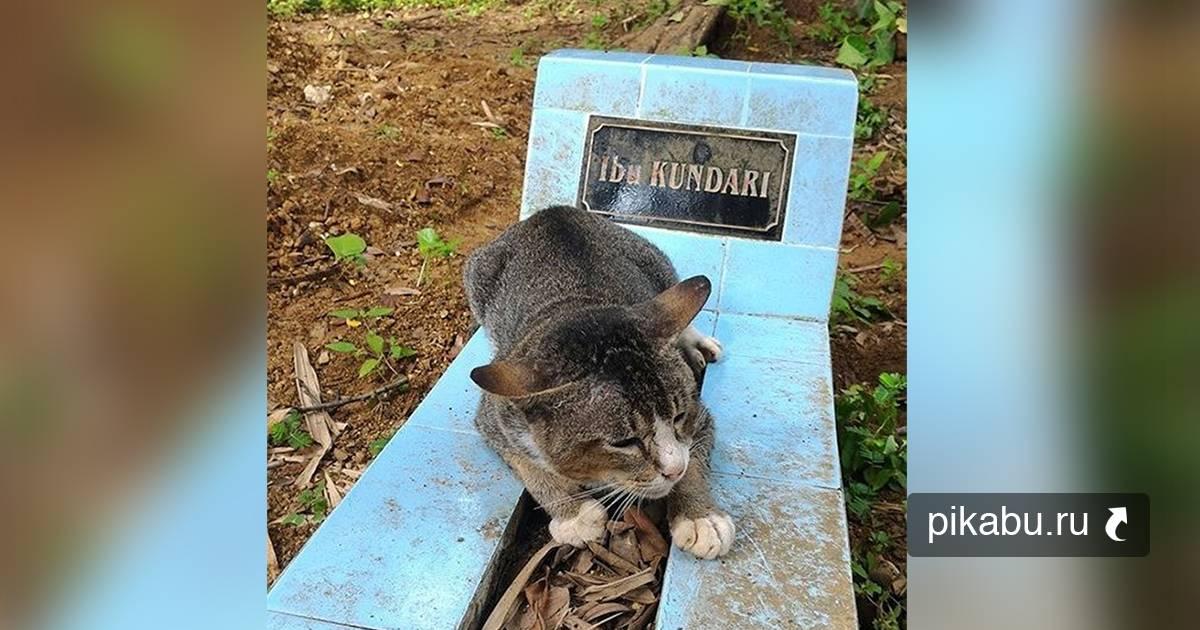 От каких болезней умирают кошки - муркин дом