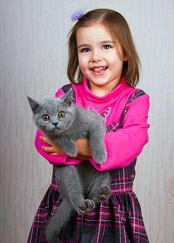 Как познакомить кошек?