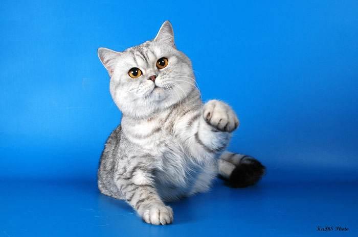 Как приучить кошку к воде