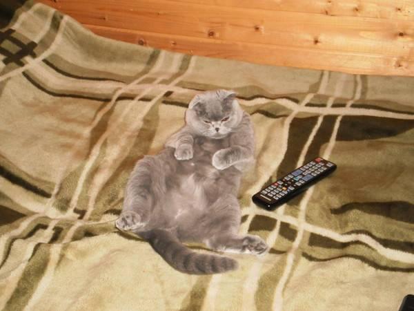 Умеют ли кошки пускать газы – пускают ли коты?