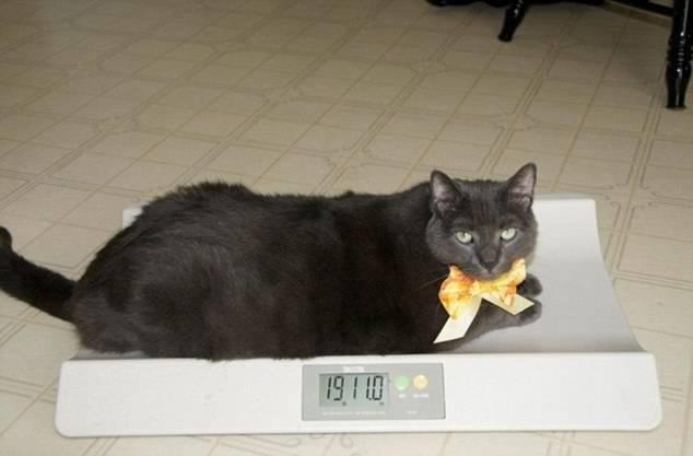Почему кот худеет, но ест хорошо?
