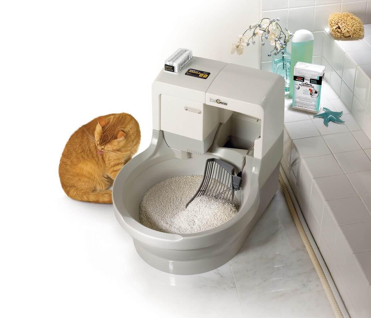 Туалет для кошки: как выбрать. 3 совета от заводчиков - kotiko.ru