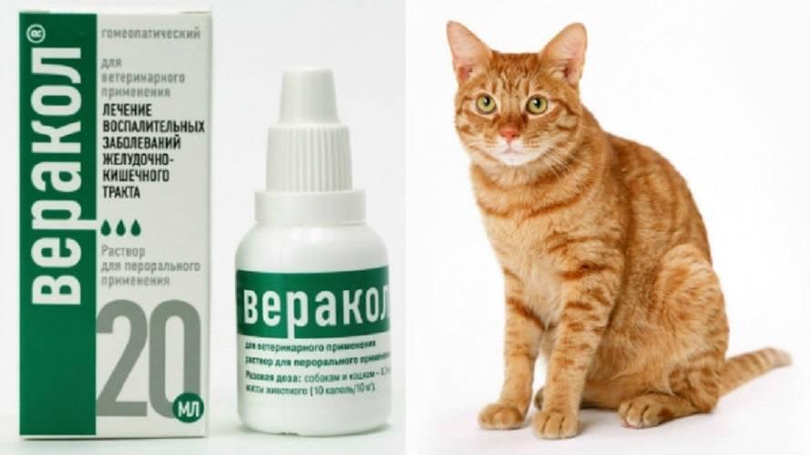 Препарат дексафорт: помощь при воспалительных и аллергических патологиях у кошек