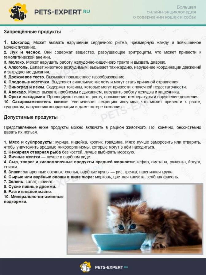 Что делать в случае, если кошка отравилась?