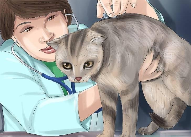 Почему кошка после родов часто дышит. кошка после родов беспокойная и мяукает: главные причины