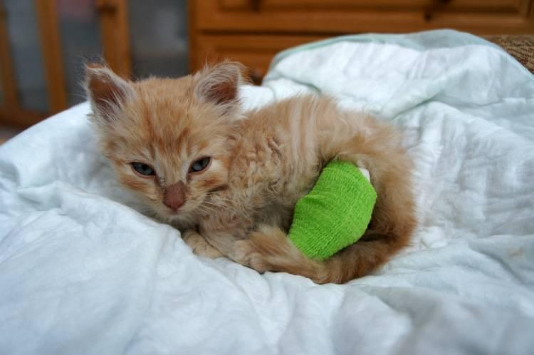 Сотрясение мозга у кошки. 8 вероятных симптомов - love cats
