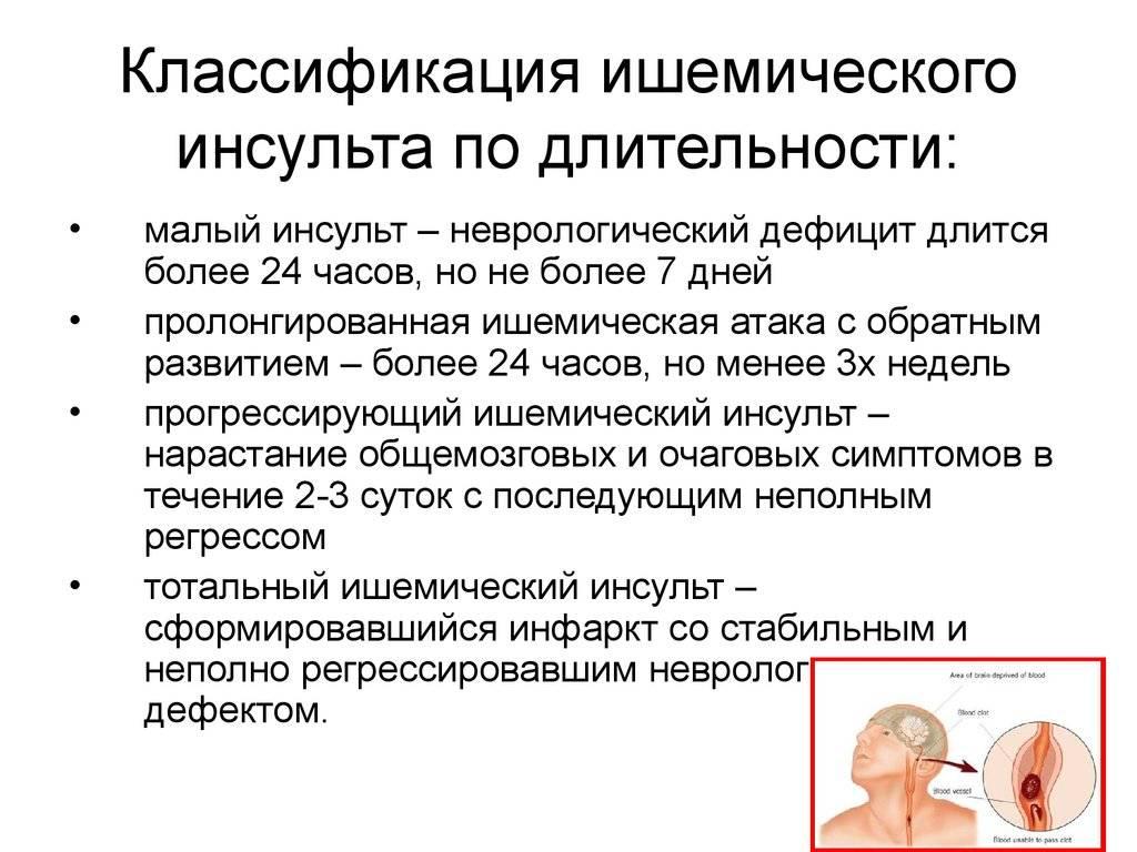 Инсульт у кошек - симптомы и лечение