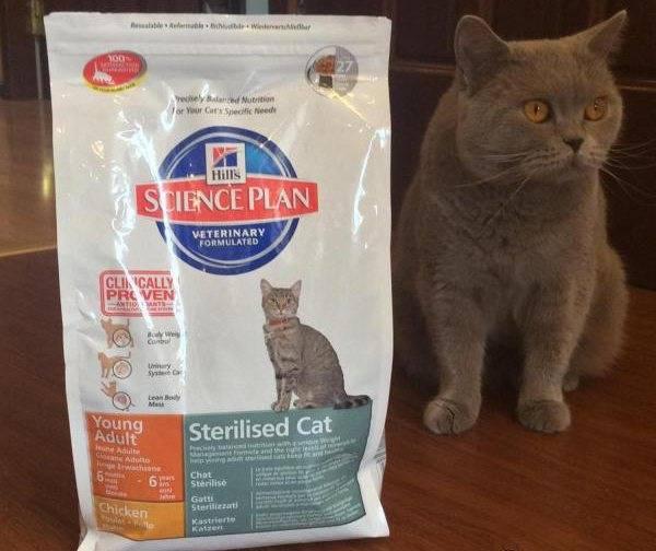 Каким кормом кормить британскую кошку | лучший корм, отзывы ветеринаров
