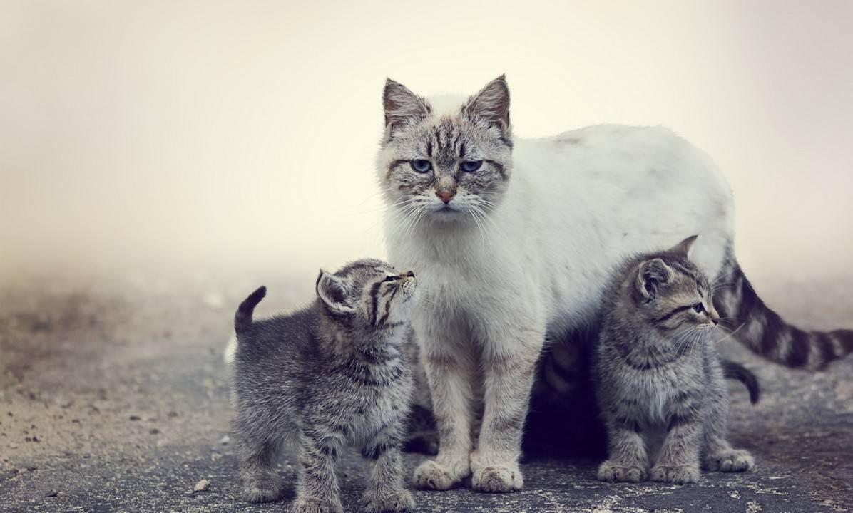 Причины уничтожения потомства мамой-кошкой