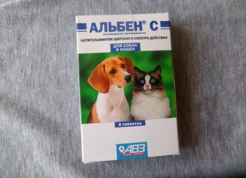 Альбен с для кошек: инструкция по применению, дозировка и отзывы о препарате