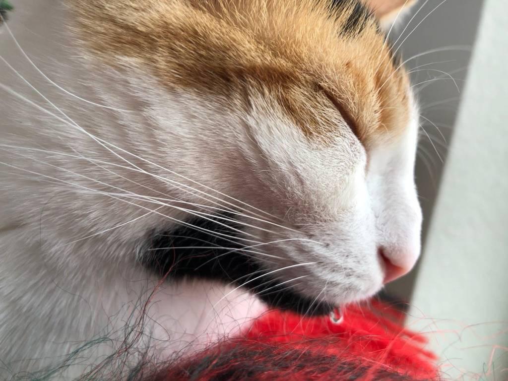 Что делать, если у кошки постоянно текут слюни?