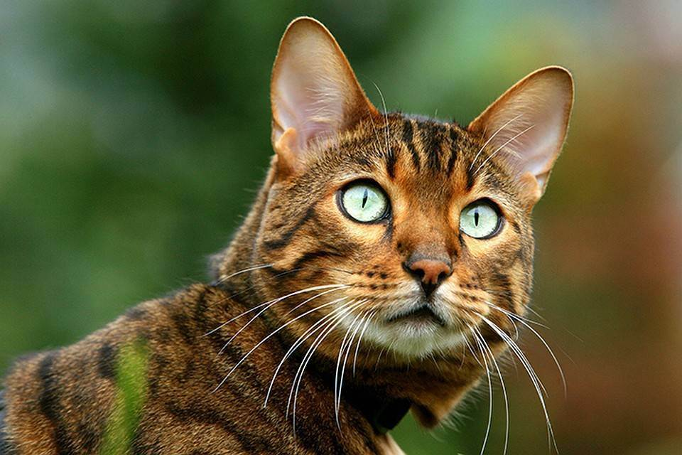 Самые опасные корма для кошек