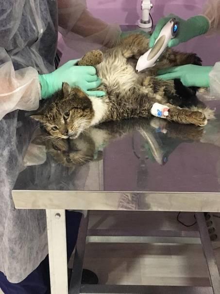 Эвтаназия кошки: как происходит, препараты, за и против, цена