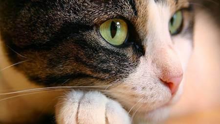 Как узнать что кошка заболела. 15 признаков указывающих на болезнь