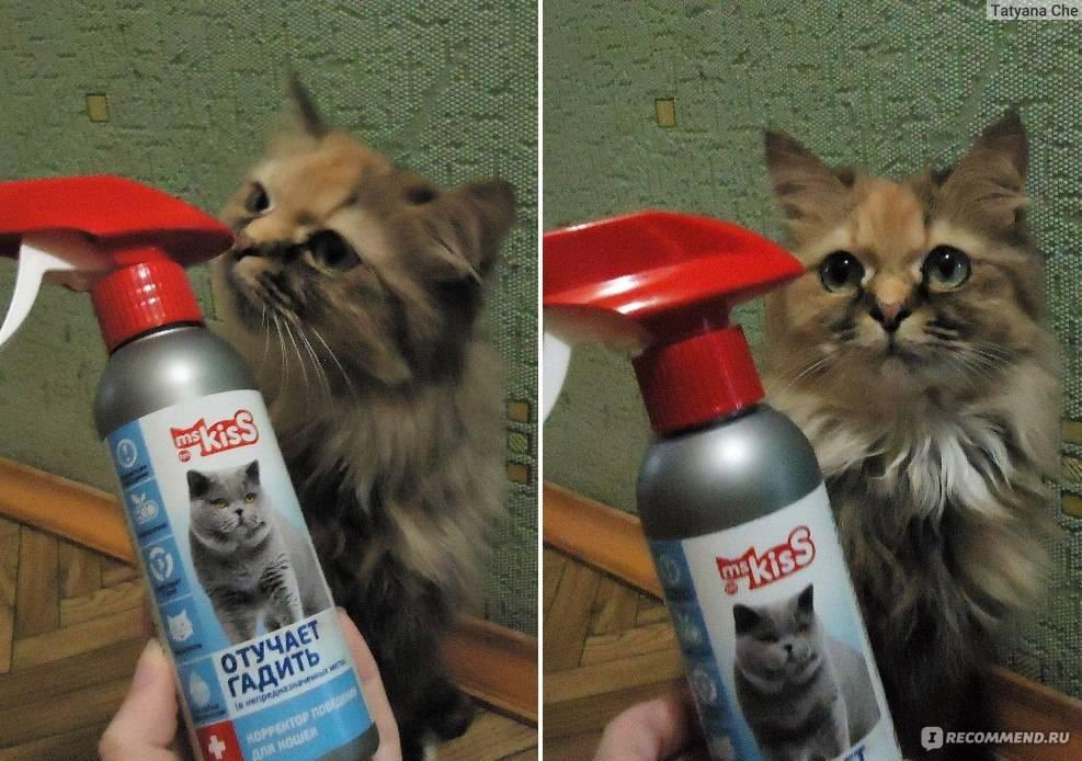 Какие запахи не переносят кошки: как их отпугнуть, какие запахи не любят коты