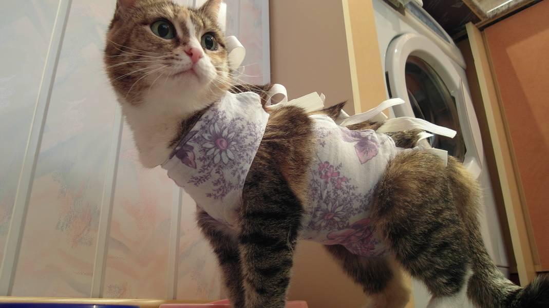 Как понять, что кот просит кошку: признаки половой охоты
