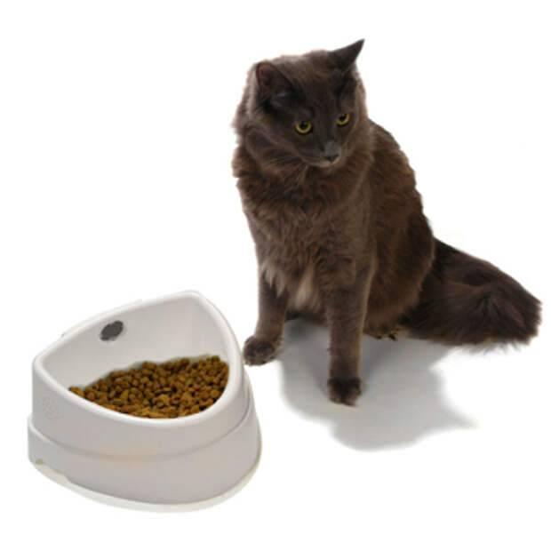 Что делать, если котенок плохо, мало ест или совсем ничего не хочет кушать?