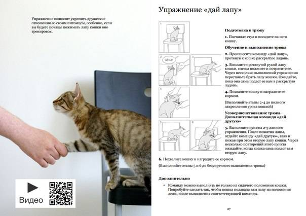 Как самостоятельно дрессировать кошку в домашних условиях, инструкция