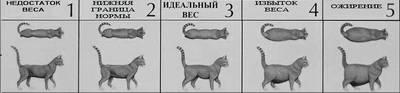 Сколько котят кошка может родить в первый раз и за всю жизнь, от чего зависит количество малышей в помете?