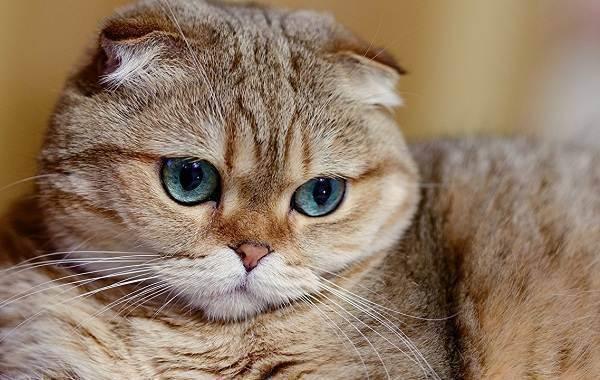 Характер кошек (19 фото): особенности поведения котов. породы кошек, имеющих повадки собаки