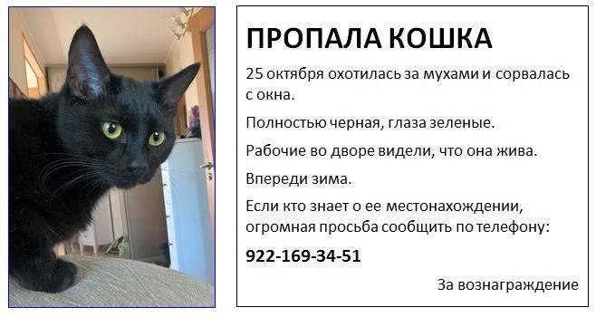 Пропала кошка: что делать, как искать её, советы