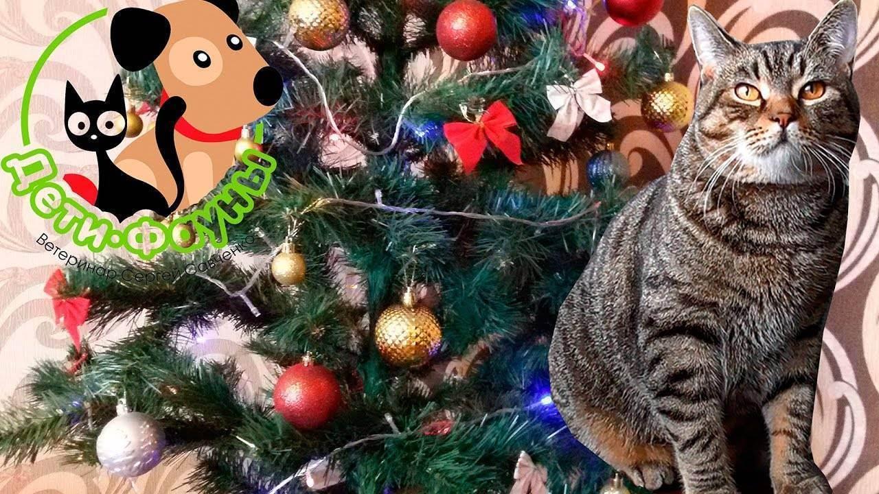 Опасность новогодней ёлки для домашней кошки. | интересный факт!