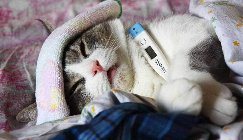 Кошка ничего не ест только пьет воду: основные причины, что делать, как помочь питомцу