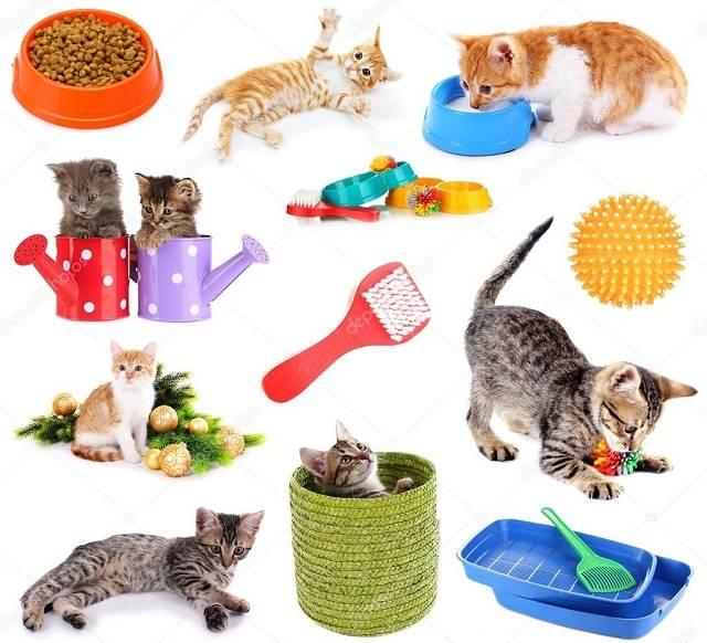 Как приучить кошку к новому месту жительства и адаптировать к новому хозяину